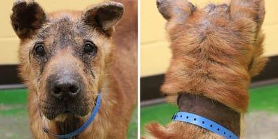 Nach 8 Jahren in der HÖLLE: Hund Mojo erlebt persönliches Wunder