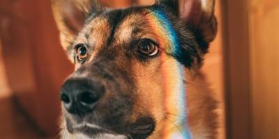 superar la muerte de un perro