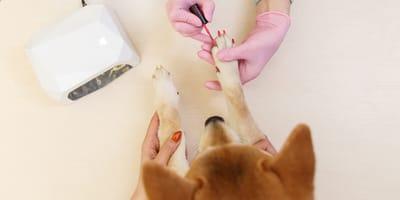 ¿Se puede pintar las uñas a los perros?