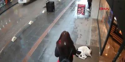 Die Überwachungskamera zeigt, wie eine Frau auf einen Hund zugeht