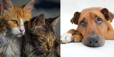 Sad abandoned pets