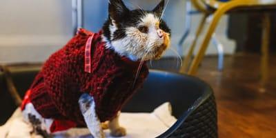 Kranke Katze sitzt in Körbchen