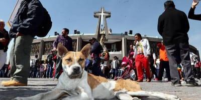 perro en la basilica de guadalupe