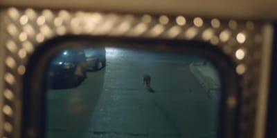 perro corriendo tras la ambulancia