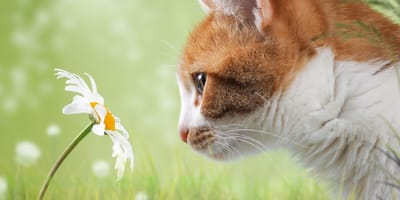 Ginger cat next to flower