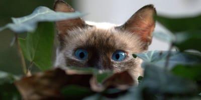 Gatto-nascosto-tra-le-siepi
