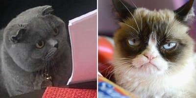 Los mejores memes de gato de la década: de 2010 a 2020