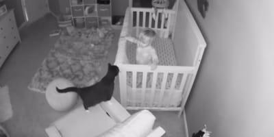 Katze steht am Babybett