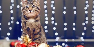 gatos regalos navidad 2019