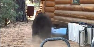 casa-legno-orso-bruno