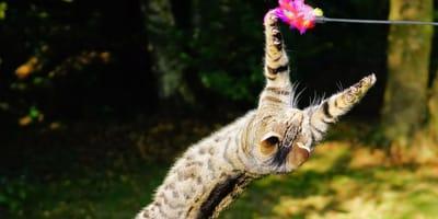 gatto-kung-fu