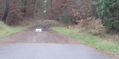Plastikowe pudełko porzucone w lesie: kobieta słyszy pisk i zaczyna się koszmar