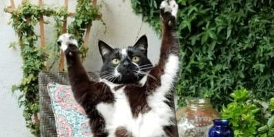 gatto con zampe in aria