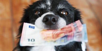 cane-con-soldi-in-bocca