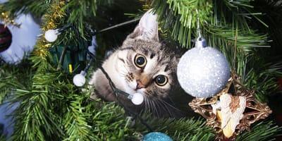 Katze sitzt im Weihnachtsbaum