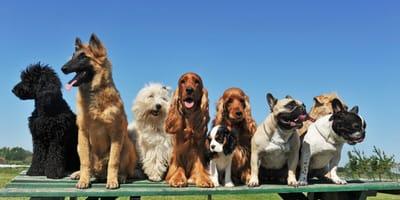 un-gruppo-di-cani-all'aperto