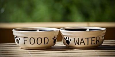 Ciotole per cani con dermatite atopica
