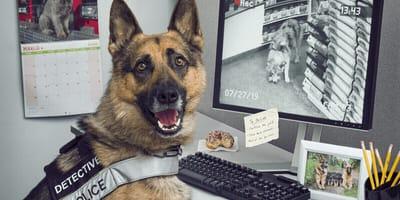 Kalendarz 2020 z psami