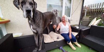 Ein sanfter Riese: So riesig war Freddy, der größte Hund der Welt