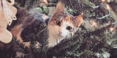 Cats love climbing the Xmas tree