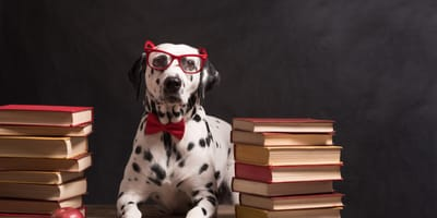 Dalmatian wearing glasses surrounded by books