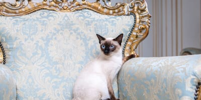 Ever wondered how many rare breeds of cat there are? Here is our Top Ten