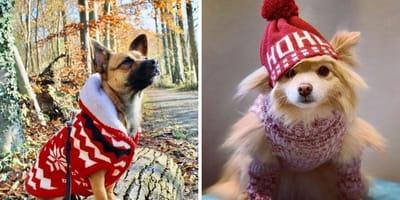 perrito con jersey de navidad