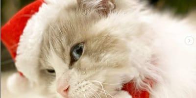gattino con cappellino natalizio