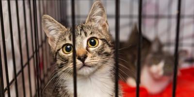 adopción legal mascotas