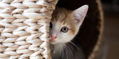 Sie denken, ihr Kätzchen hat die Küken gefressen: Doch es hat ein ganz anderes Geheimnis!