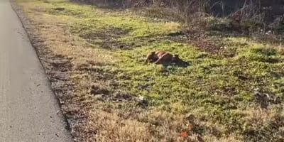 Der Hund liegt regungslos am Straßenrand