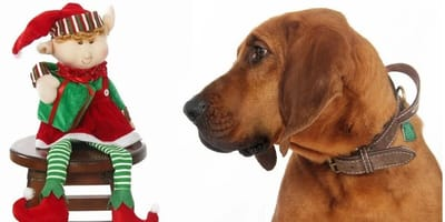Dog looks at christmas toy