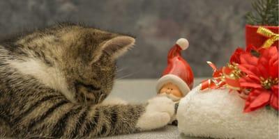 gattino gioca con decorazioni natalizie
