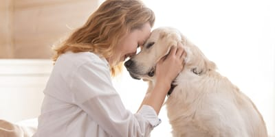 Get ready for cuddle time: Here are 5 of the most affectionate dog breeds