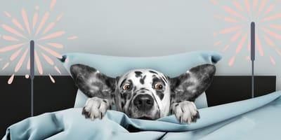 ¿Por qué los perros tienen miedo a los cohetes y petardos?