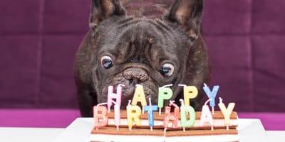 Wie rechne ich Hundejahre sinnvoll in Menschenjahre um?