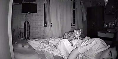 Katze hockt auf schlafendem Mann
