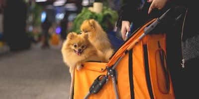 cane-nel-carrello