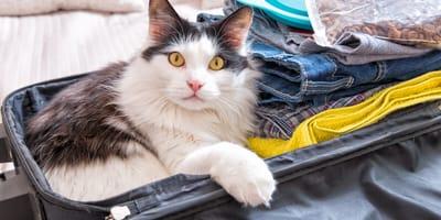 gato viaja en avión