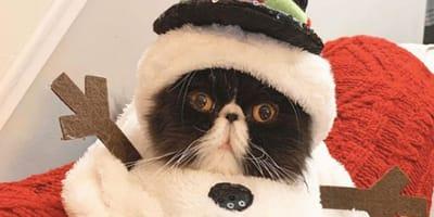 Gatto-vestito-da-pupazzo-di-neve