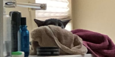 """Check out the hilarious """"Yoda"""" cat who went viral in minutes"""