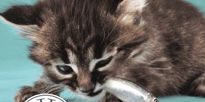 Das Foto der Katze auf Salvinis Facebook-Seite