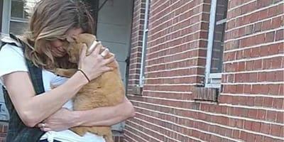 Ten zaginiony 536 dni temu kotek skoczył w ramiona swojej pani tak, jakby nigdy się z nią nie rozstawał
