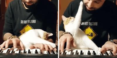 gato y humano tocando el piano