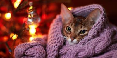 gato con manta en navidad