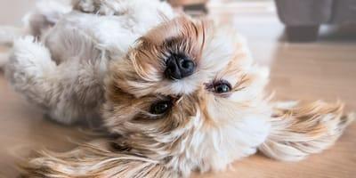 Capire gli stati d'animo del cane con il linguaggio del corpo