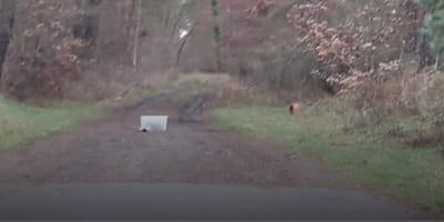 contenitore-di-plastica-con-gatto-dentro-abbandonato-nel-bosco