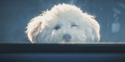 Hund an der Fensterscheibe