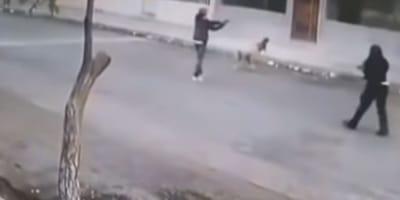 perros contra ladrón