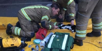 Firefighters resuscitate poorly cat